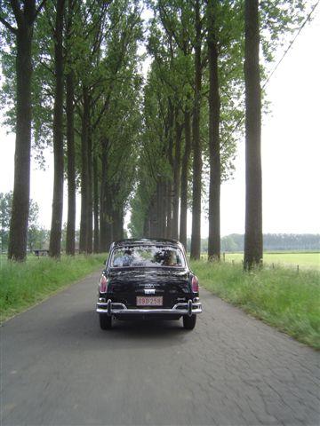 driving between trees